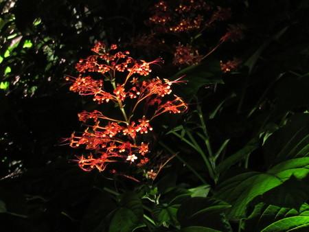 Orange Subtropical Flowers at Night 版權商用圖片