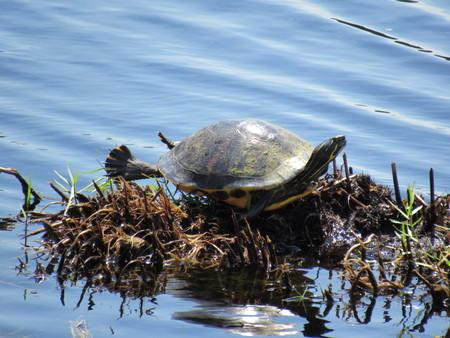 Turtle Stretch Banco de Imagens