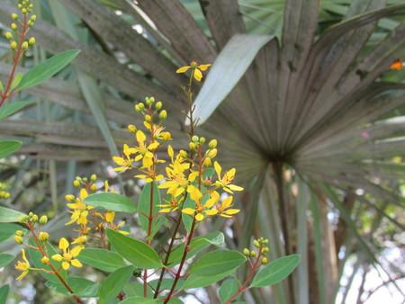 Yellow Blooms Stockfoto