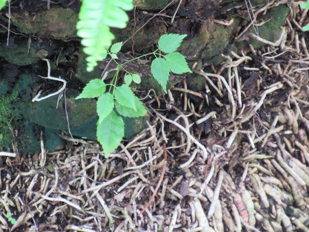 Starting Ivy on Palm Tree