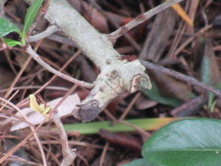 Horsehead Branch Zdjęcie Seryjne