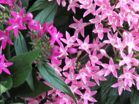 Pink Blossoms Banco de Imagens - 105834295