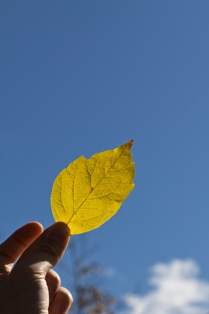 A fall leaf against the blue sky in Madrid photo