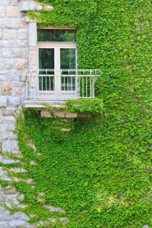 Ivy climbing up a building in Budapest, embracing a balcony photo