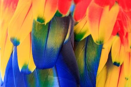 piume: Colorful stretta di piume di un ara Archivio Fotografico