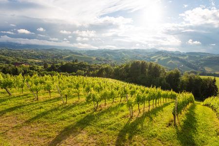 Southern Styrian landscape near Gamlitz, Austria - similar to Toscana in Italy Imagens - 42937885