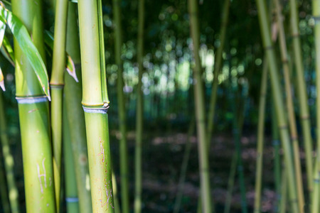 Closeup of bamboo trunks in the woods Imagens