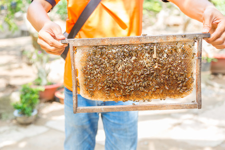 A man holding a wooden frame of a beehive with honey and bees on display
