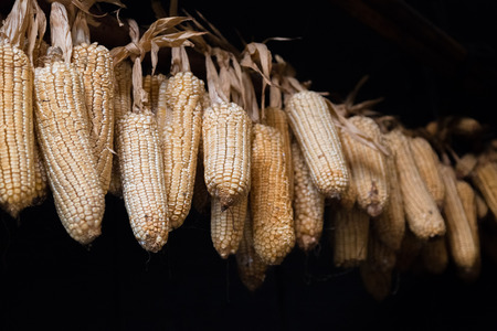 Corn hanging on a rope to dry in an old poor building in a hmong village in Vietnam