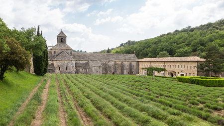 Abbaye de Senanque with green lavender in Provence, France Imagens