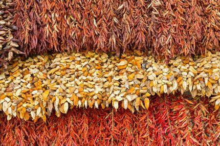 Different hanging types of dried chili in red and white Imagens