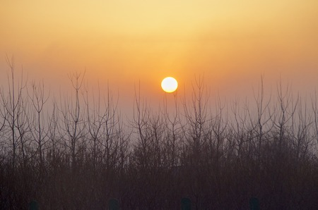 Sunset Above The Trees In Beijing China