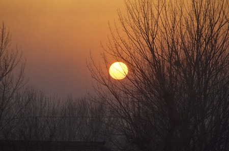 Sunset Beyond The Trees And Power Lines In Beijing China