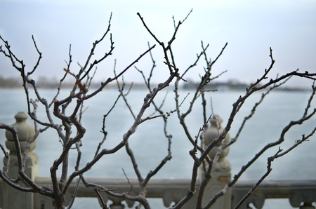 frozen lake: Bare Branches Splayed Before Frozen Lake Kunming Outside The Imperial Summer Palace In Beijing China Stock Photo