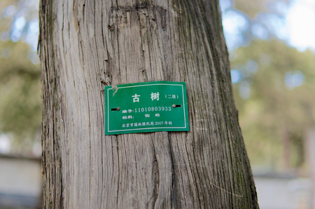 tagged: An Ancient Tagged Chinese Tree Within The Summer Palace In Beijing Stock Photo