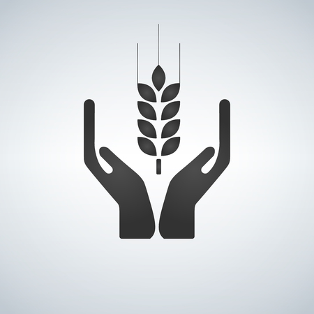 Hands holding a wheat plant icon, Black vector illustration isolated on light background