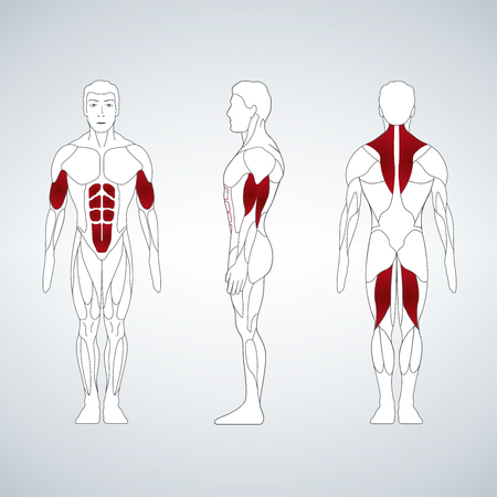 Full length muscle body, front, back view of a standing man, vector illustration isolated on black background Illustration