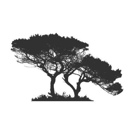 Afrikanischer Baum im Schattenbild. Stock Vektorgrafik isoliert auf weißem Hintergrund.
