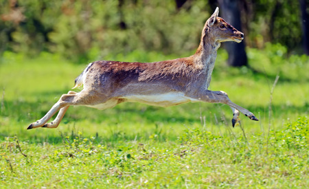 Lan wild in their natural habitat in the spring photo