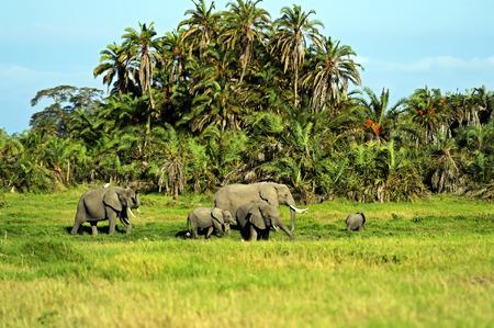 Elephants family on African savanna. Safari in Amboseli photo