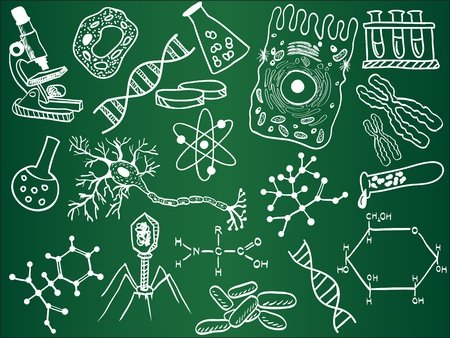 Bocetos de Biología en la junta escolar Ilustración de vector