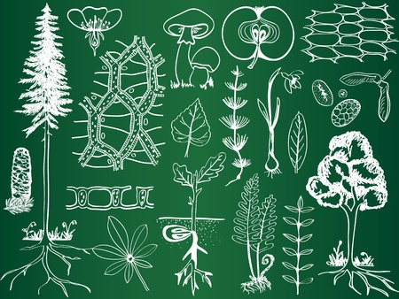 photosynthesis: Biology plant sketches on school board - botany hand-drawn illustration