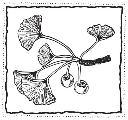 gingko: Ginkgo biloba hand-drawn branch with leaves, decoration frame