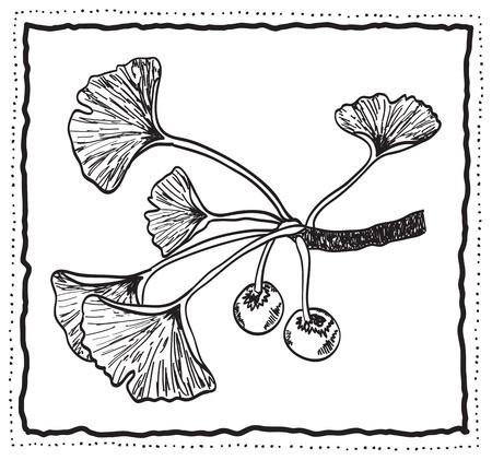 ginkgo: Ginkgo biloba hand-drawn branch with leaves, decoration frame