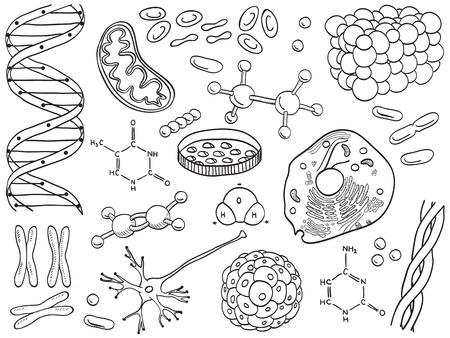 biologia molecular: Los iconos de biolog�a y qu�mica aislada, dibujado a mano ilustraci�n Vectores