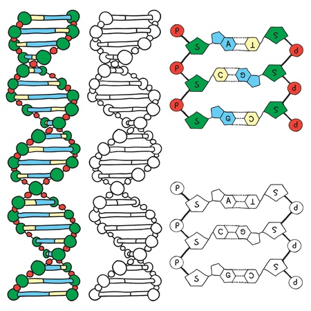 DNA - helix molecule model, hand-drawn illustration Vector