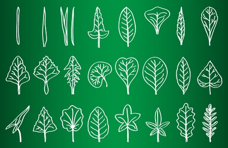 Collection of Leaf Silhouettes on School Board - hand-drawn illustration Stock Vector - 13454041