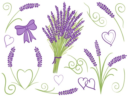 Illustration of lavender bouquet other lavender design elements Vector