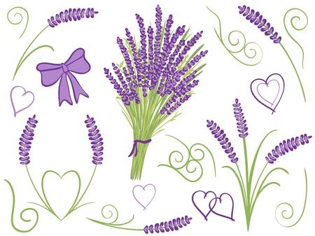 lavander: Illustration of lavender bouquet other lavender design elements