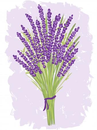 원예: 수채화 배경에 라벤더 꽃다발의 그림