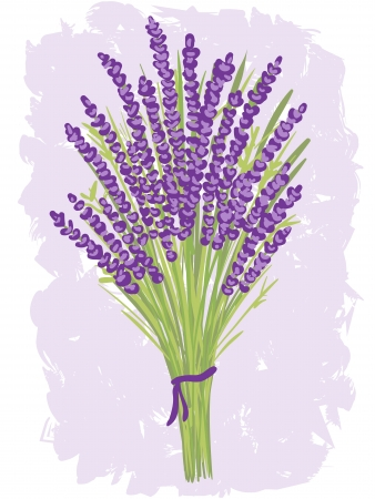 lavander: Illustration of lavender bouquet on watercolor background