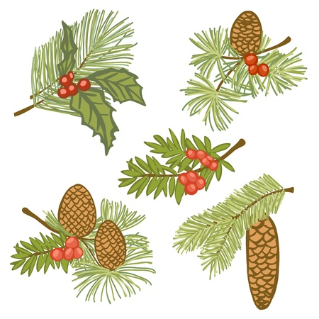pinecone: Illustration of evergreen branches with cones and berries, design elements isolated on white background