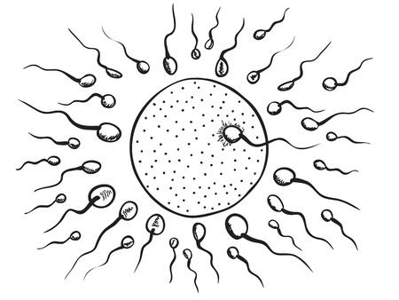 espermatozoides: Ilustración de la fertilización del óvulo - estilo dibujado a mano