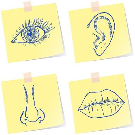 �couter: Illustration de l'?il, l'oreille, le nez et la bouche sur des notes de papier Illustration