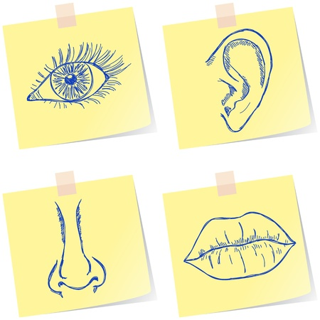 Illustration of eye, ear, nose and mouth on paper notes