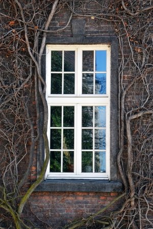 windows frame: White window with vines on the wall