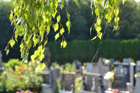 Cemetery scene and birch branches over it