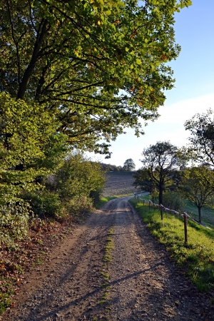 Local road in the fields and woods in autumn photo