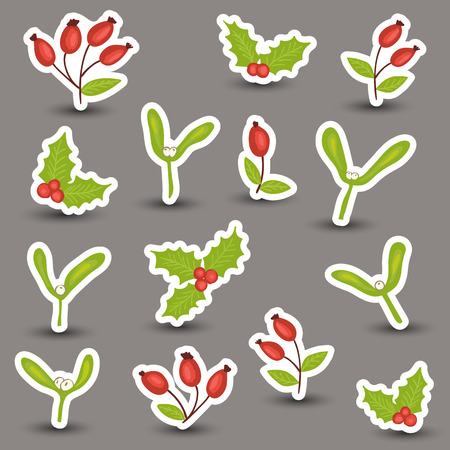 Christmas winter natural decoration - rosehip, mistletoe and holly Vector