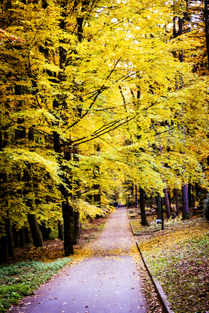 forest park: Pathway through the autumn trees in cemetery Stock Photo