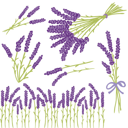 lila: Vector floral set of colored lavender design elements. Spring or summer lavender hand drawn illustrations.