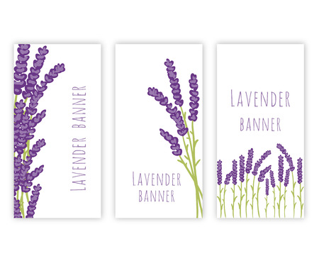 lila: Vector floral set of colored lavender design elements. Spring or summer lavender hand drawn banners. Illustration