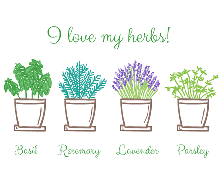 Collection of frest garden herbs in pots, hand drawn illustration Ilustracja