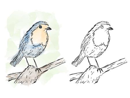 Illustration of hand drawn bird on branch, watercolor artwork