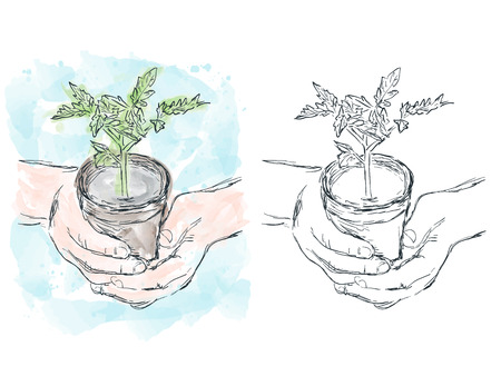 Illustration of hand drawn growing plant, watercolor artwork Illustration