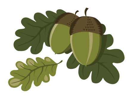 Decorative illustration of green fresh acorns with oak leaves
